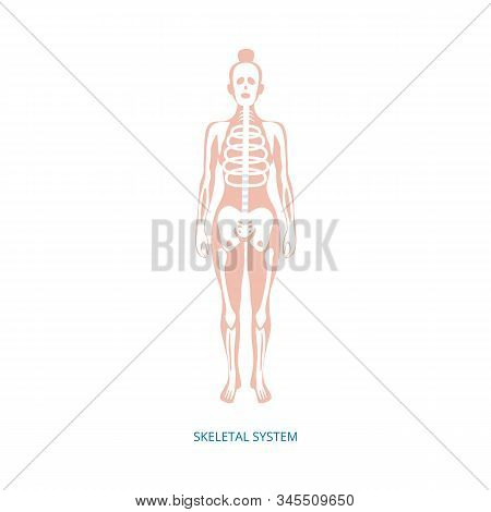 Human Female Skeletal System Infographic Element, Vector Illustration Isolated.