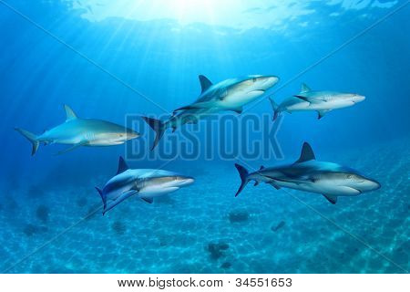 Sharks in the Ocean (Composite) poster