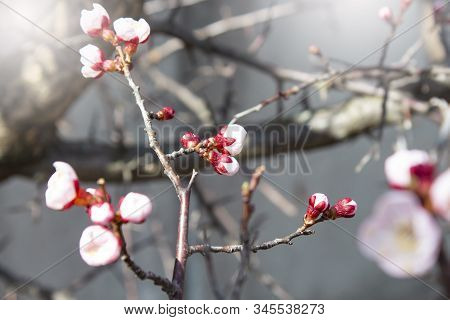 Spring Flower Landscape. Spring Blooming Flowers. Flowers In The Spring. Copyspace
