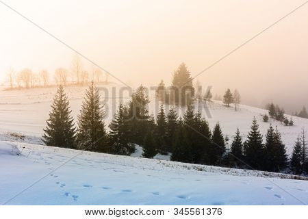 Mountainous Countryside In Fog. Glowing Winter Mist At Sunrise. Spruce Trees On The Snow Covered Mea