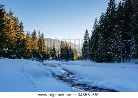 Frozen And Snow Covered Mountain River. Carpathian Winter Landscape In Afternoon Light. Spruce Fores