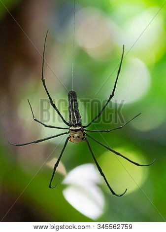 A Black And Yellow Colour Spider Is Photographed Close Up, Macro Picture,natural Background,spider A