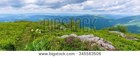 Wild Plants And Flowers On The Hillside. Beautiful Nature Scenery Of Alpine Grassy Meadows In Carpat