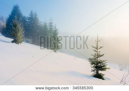 Winter Fairy Tale Landscape In Mountains. Beautiful Nature Scenery With Coniferous Forest In Fog And
