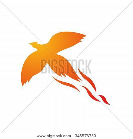 Fire Bird Phoenix Logo Design Vector Illustrations Graphic