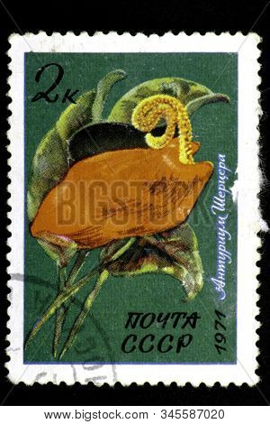 08 12 2019 Divnoe Stavropol Territory Russia Postage Stamp Ussr 1971 Tropical And Subtropical Plants