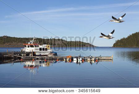 Baltic Sea, Sweden On September 05. A Couple Of Goosanders Pass Barsta Bridge On September 05, 2016