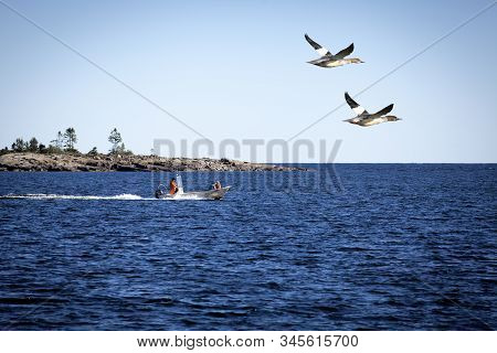 Baltic Sea, Sweden On September 05. A Couple Of Goosanders Pass A Motorboat On September 05, 2016 By