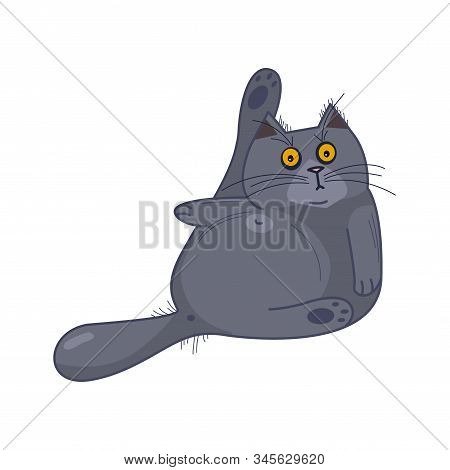 Frightened British Fat Cat With Wide Open Eyes Washes Himself On White Isolated Background, Cartoon