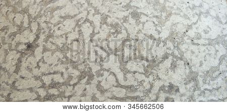 Limestone Polished Texture Sample At Geological Laboratory. Stone Samples At Geological Laboratory.