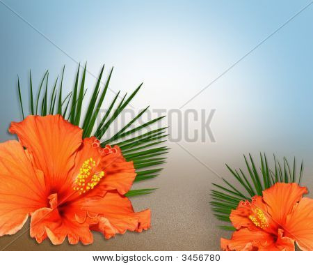 Tropical Hibiscus Flowers On Sand