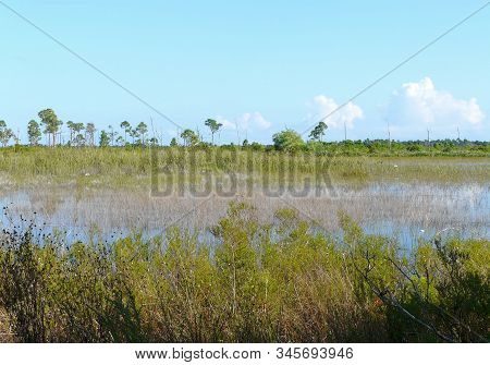 Savannas Preserve State Park Florida Marsh