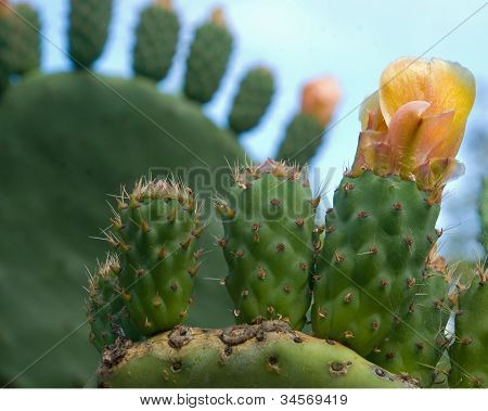 Prickly Pear Cactus Wave