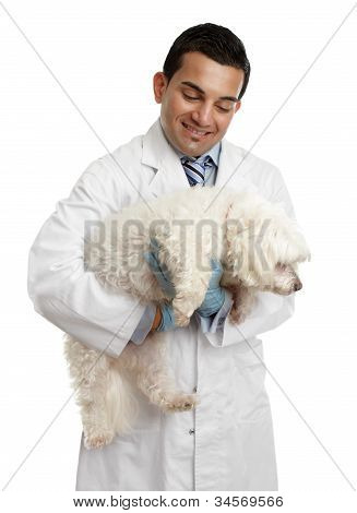 A male veterinarian carries a small dog in his arms. White background. poster
