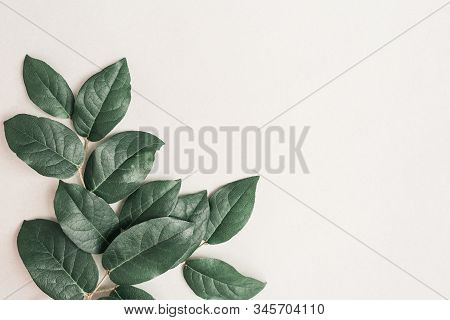 Natural Branch Of Tree With Green Leaves On Light Paper Background. Greeting Card With Spring Green
