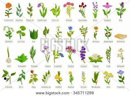 Medicinal Herbs Icons Set. Cartoon Set Of Medicinal Herbs Vector Icons For Web Design