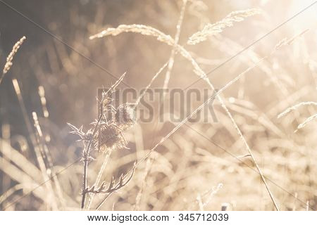 Close Up Of Meadow In Winter Sunrise Nature Background. Nature Background Of Meadow Flowers In Sunri