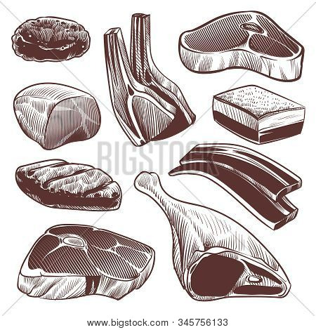 Sketch Meat. Hand Drawn Fresh Raw Meat Products Collection, Beef Steak And Ham, Pork Fillet And Lamb