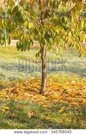 Fallen Leaves Concept. Autumn And Fall Concept. Autumn Colored Fallen Leaves On The Ground In The Su