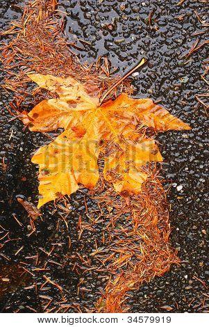 Fall Umpqua