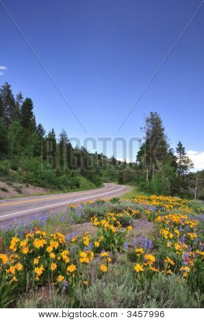 Mountain Road With Wildflowers