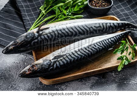 Mackerel Fish With Parsley And Pepper. Fresh Seafood. Gray Background. Top View
