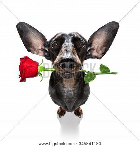 Valentines Wedding Dog In Love