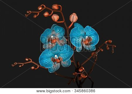 Orchid Flowers And Buds In Abstract Duo Colors On A Gray Background