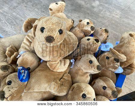 Orlando,fl/usa-1/17/20: A Bin Of Soft Plush Sea Lions Or Sea Otters Stuffed Animals At Seaworld Orla