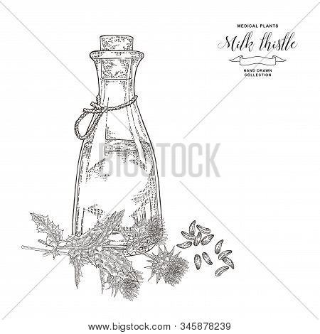 Milk Thistle Oil Hand Drawn. Thistle Flowers And Seeds With Glass Bottle. Medicinal Gerbs Collection