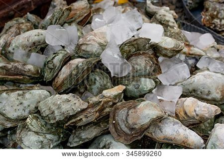 A Flat View Of Oysters With Lemons In Ice For Sale On The Food Market. Seafood Luxury Delicacy. Salt