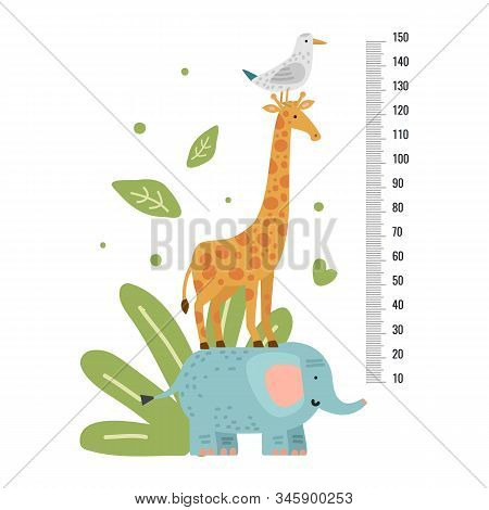 Height Measure. Measuring Ruler Children, Growth Scale For Kindergarten, Pediatric Or School With Gi