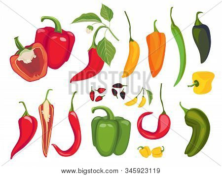 Hot Peppers. Mexican Chile Fresh Vegetarian Food Paprika Cayenne Exotic Products Vector. Illustratio