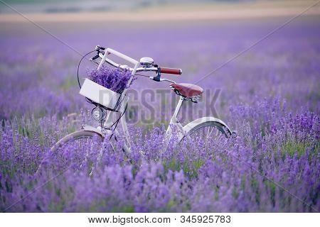 Classic Bike Stands In A Field With Lavender Closeup.