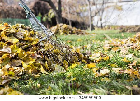 Raking Leaves With Fan Rake From The Lawn