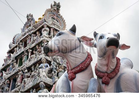 Cow Statues And Temple At Little India In Singapore