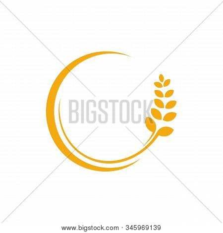 Agriculture Wheat Logo Template Vector, Luxury Wheat Logo Concept, Icon Symbol