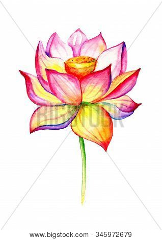 Blooming Lotus. Hand Drawn Decorative Design Element. Watercolor Illustration Isolated On A White Ba