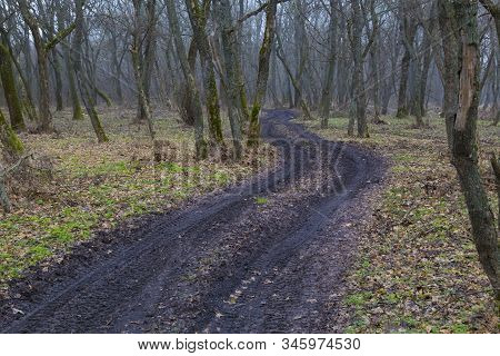 Spring Nature. Early Spring In Foggy Forest. A Winding Black Dirty Road Winds Among Leafless Deciduo