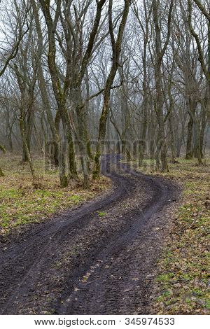 Spring Nature. Early Spring In Foggy Forest. A Winding Black Unpaved Road Winds Among Leafless Decid