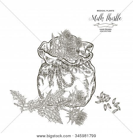 Milk Thistle Plant Hand Drawn. Thistle Flowers And Seeds With Textile Bag. Medical Gerbs Collection.