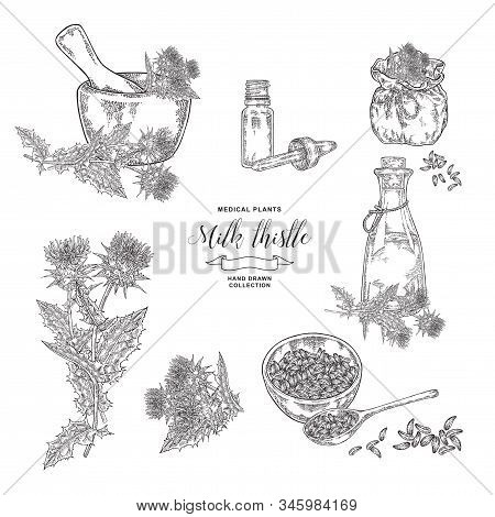 Thistle Milk Plant Collection. Thistle Flowers And Seeds With Wooden Bowl, Mortar And Glass Bottles
