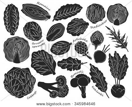 Cabbage Of Lettuce Vector Black Set Icon.vector Illustration Set Vegetable Food. Isolated Black Icon