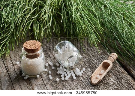 Horsetail Healing Herb And Two Bottles Of Homeopathic Globules. Homeopathy And Herbal Medicine.