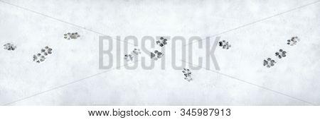 Banner Of Dog Footprint. Pattern On White Backdrop. Winter Season Symbol. Snowy Weather. Winter Walk