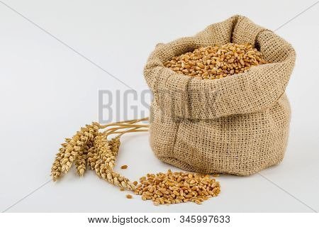 Grain, Wheat In Burlap Bag Isolated On White Background