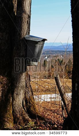 Bucket with a view