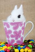 white bunny in the cup and chocolate eggs poster