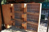 Picture of Stacks of Wooden Bird Cages poster