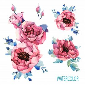 Watercolor Set Garden Roses, Pink Peony, Navy Blue Leaves, Spring, Summer Elements. Floral, Flowers
